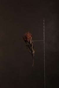 """[:en]Danas Aleksa's exhibition """"Flos artifici""""[:lt]Dano Aleksos paroda """"Flos artifici""""[:]"""