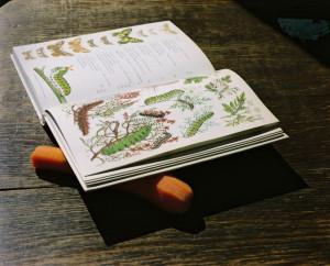 """[:en]Eva-Fiore Kovacovsky's exhibition """"Grass House""""[:lt]Eva-Fiore Kovacovsky paroda """"Žolės namas"""" [:]"""